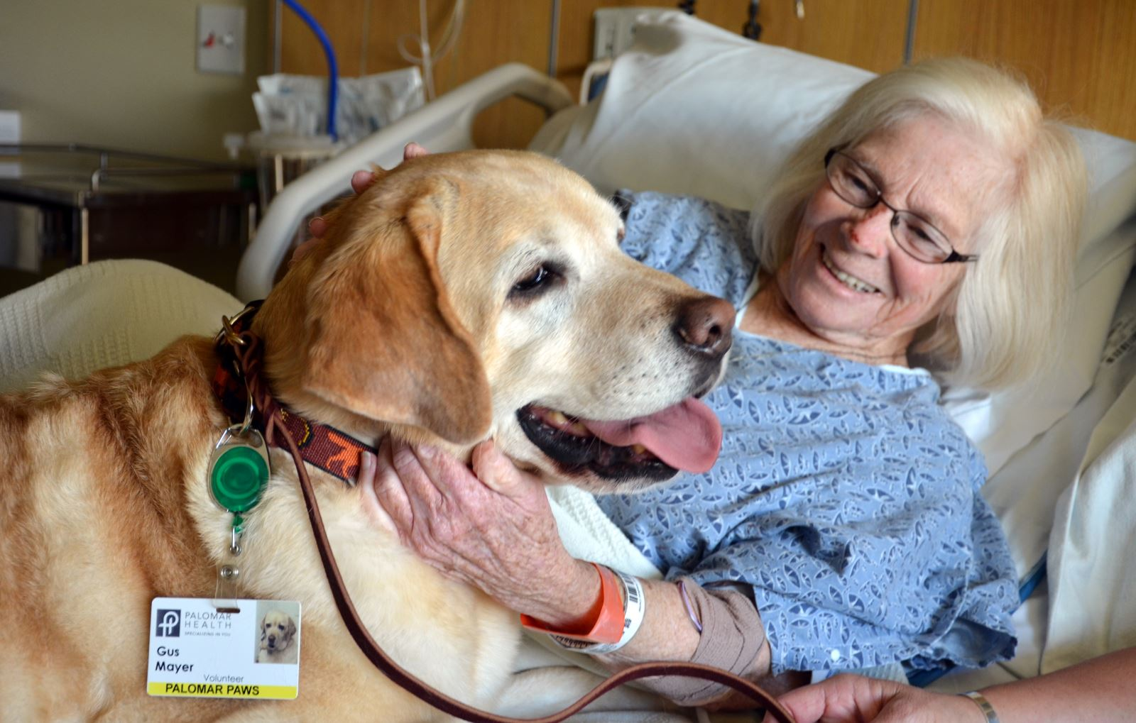 pet therapy A therapy dog is a dog that might be trained to provide affection, comfort and love to people in hospitals, retirement homes, nursing homes, schools, hospices, disaster areas, and to people with anxiety disorders or autism.